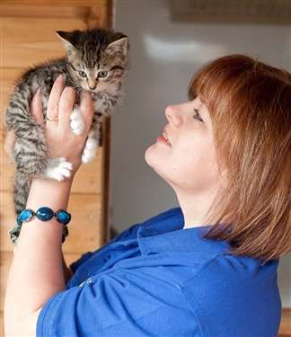 Recent rise in Cat Cruelty