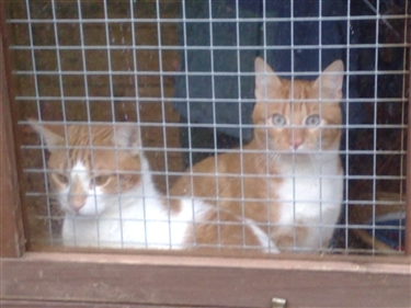 Cats Protection Bristol And District Branch