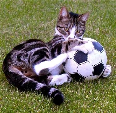 Binx - the football star