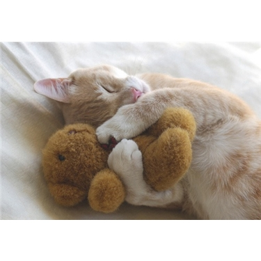 Soft Toy Appeal!