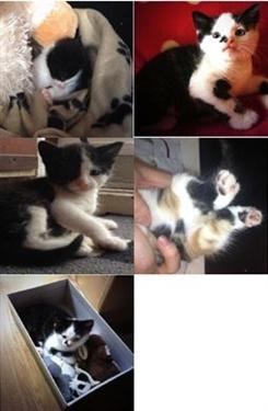 The importance of neutering your kitten