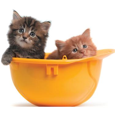 Kitten Socialisation