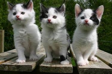 Kitten Appeal