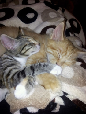 Kitten & Marmalade in their new home
