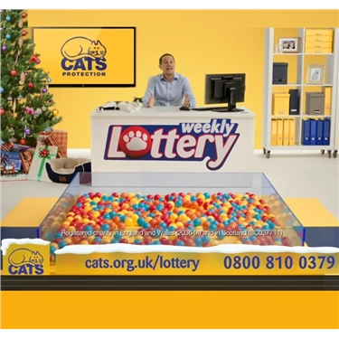 Why not enter our Cats Protection Lottery? The odds are fab and you will help cats too!