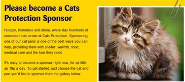 Sponsor a cat