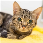 Blind cat Zenga needs a home