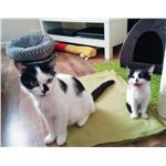 Esmeralda & Percival