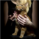 Finalists revealed for National Cat Awards 2017
