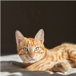 Newcastle cat is cover star for Cats Protection 2018 calendar