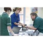 Cats Protection produces guide for the veterinary profession