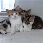 Kitten Crisis