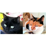 Queenie and Millie re-homed