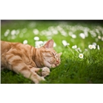 Top tips to keep your cat safe this summer