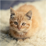 New video encourages the early neutering of cats