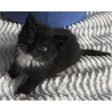 Have you considered cat fostering?