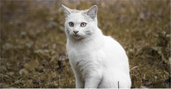 Cats Org Uk Raffle