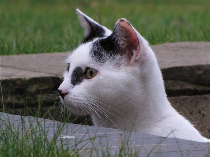 Gosport Cats Protection Facebook