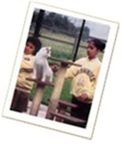 Children meeting the cats