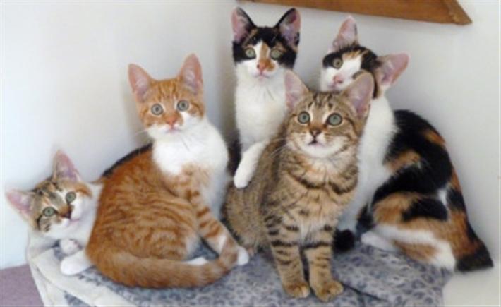 Launceston Cats Protection Uk