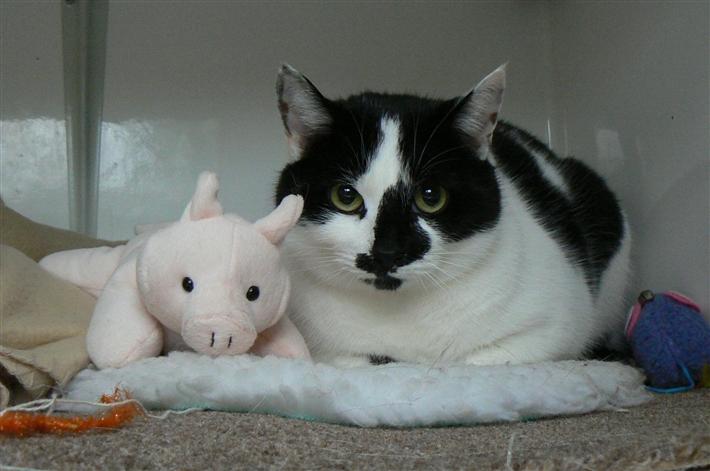 Baby White Cat Adopt