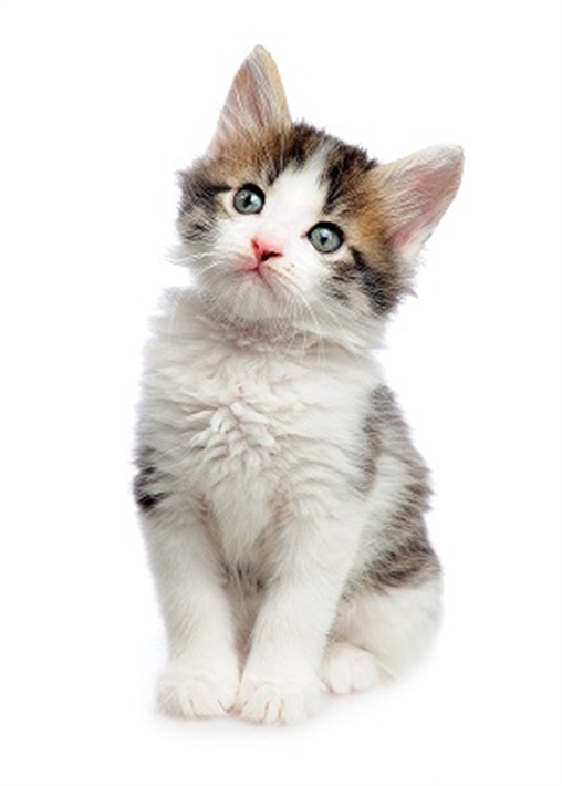 buy cat travel box