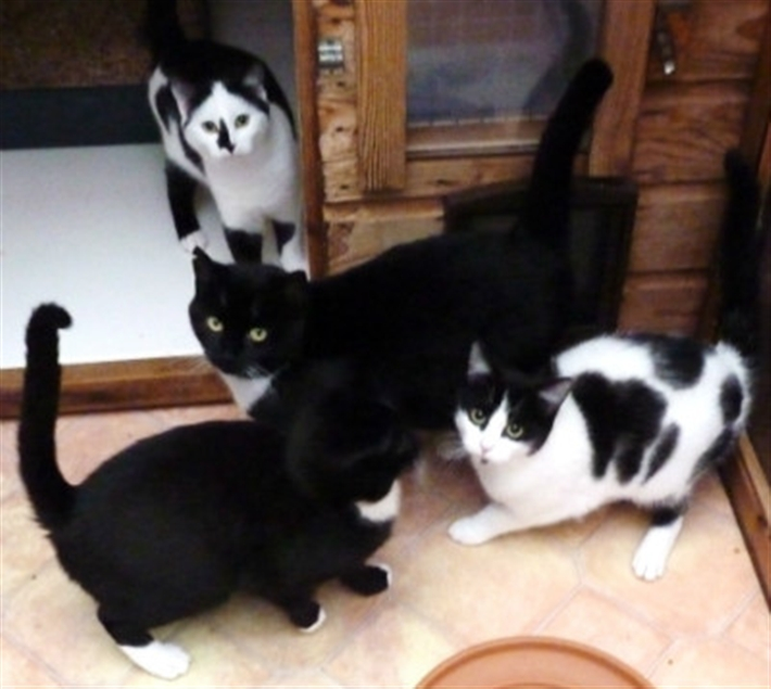 Black and white ferals seeking outdoor home