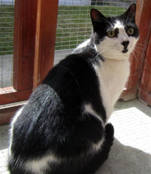 Cats Protection Amazon Wish List