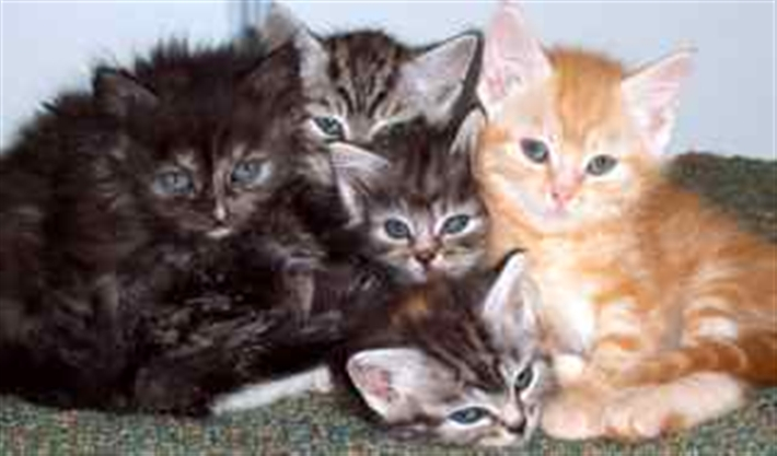 Some of the kittens we have homed in 2010