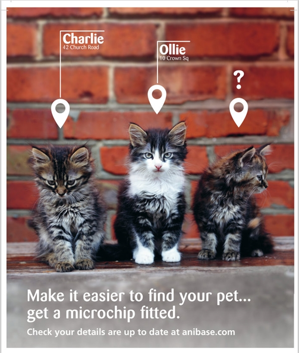Microchipping Reminder Image - 3 cats