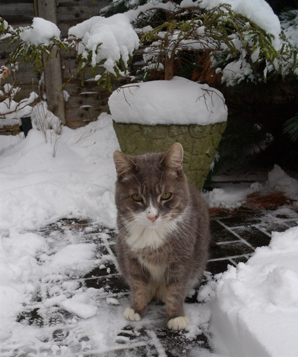 Monty-in-snow-2