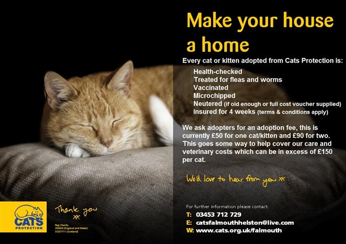Adopting  New Cats Home