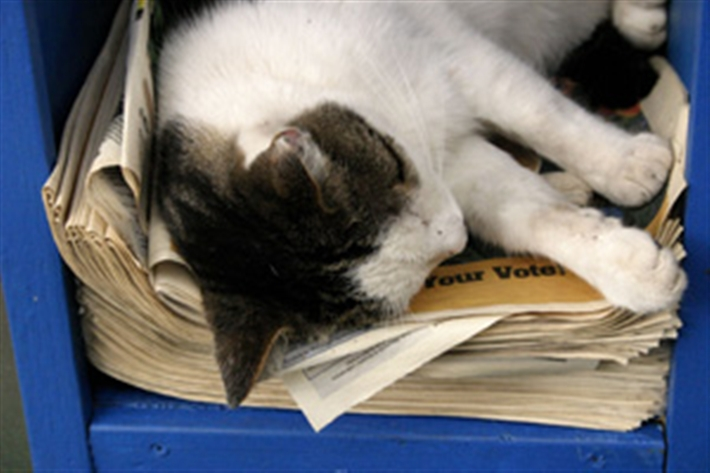 Cat asleep on a stack of newspaper
