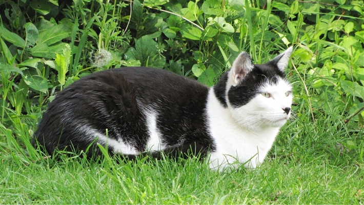 Cats Protection Luton
