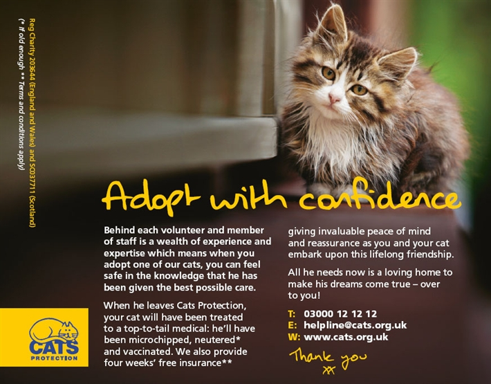 Cats Protection Kittens Derby