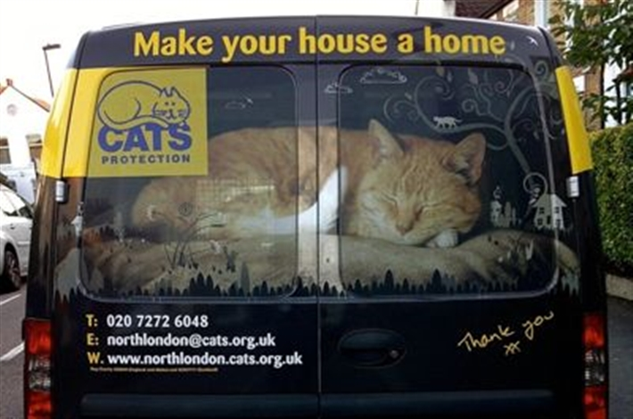 The back of the cat van reads Make your house a home