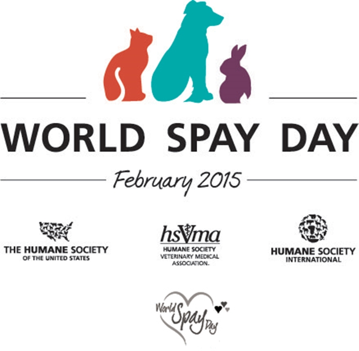 Do The Pdsa Spay Dogs For Free
