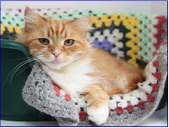 Cats Protection Cambridge Facebook