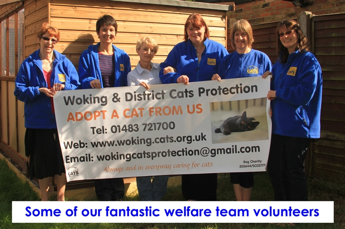 Our volunteer team that will help you find the right cat for you