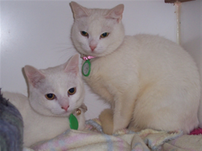 Monty and Saffron at our cattery
