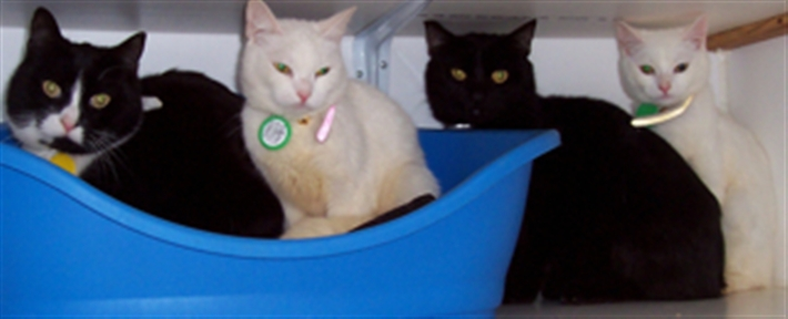 The four cats at our shelter
