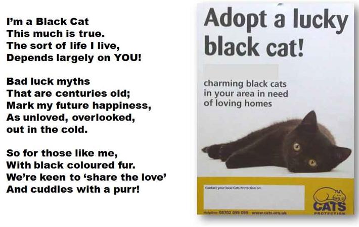 The Black Cat Acrostic Poem