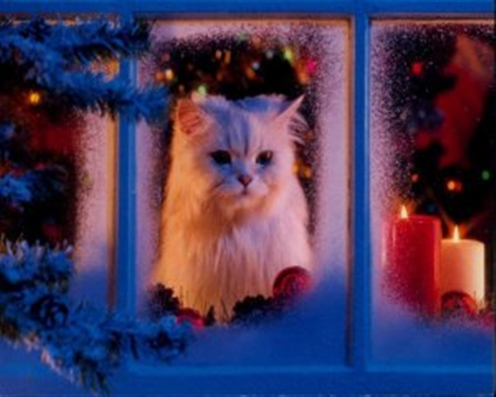 Cat in window looking at snow