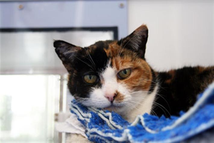 Cat in a cat cabin