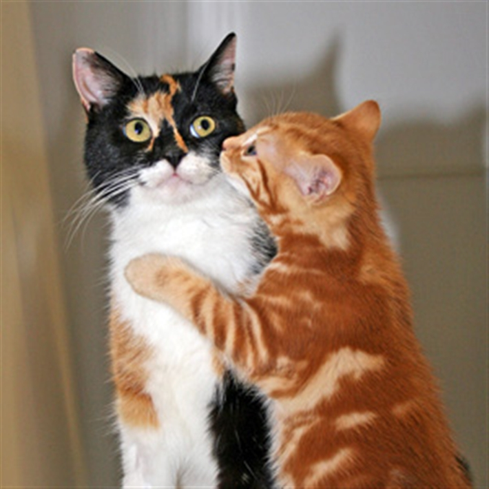 Cats Org Uk Cat Care Cat Care Downloads