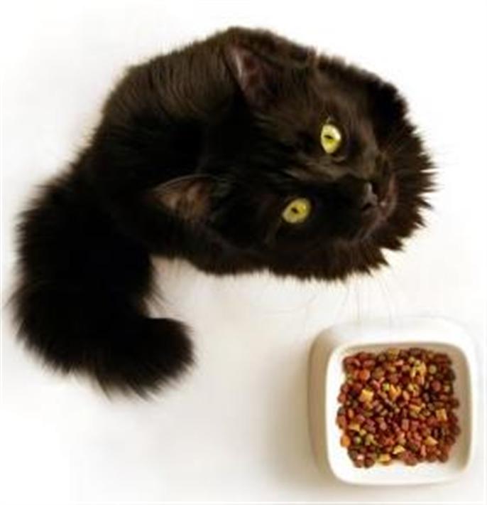 Feral Cat Food Donations