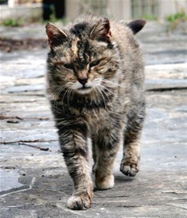 Adopt A Feral Cat Uk
