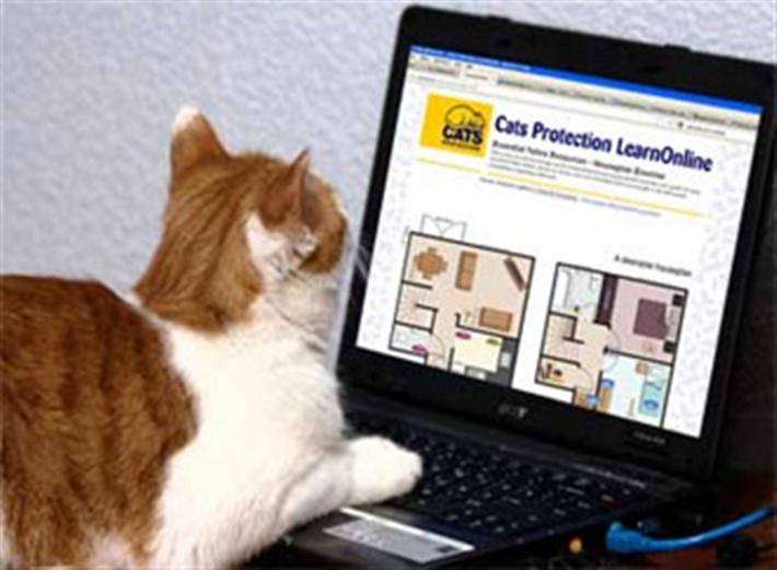 Cat at a laptop - Image author - Max Stotsky%44 licence - CC BY 2.0%44 modified by Cats Protection