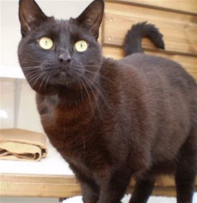 Golden Oldies Cats Protection