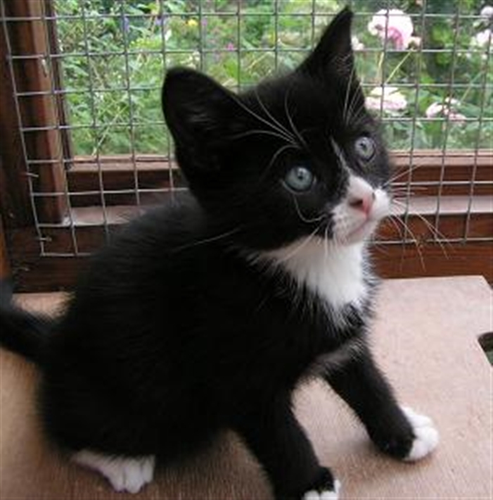 Harlow Epping Forest And District Cats Protection